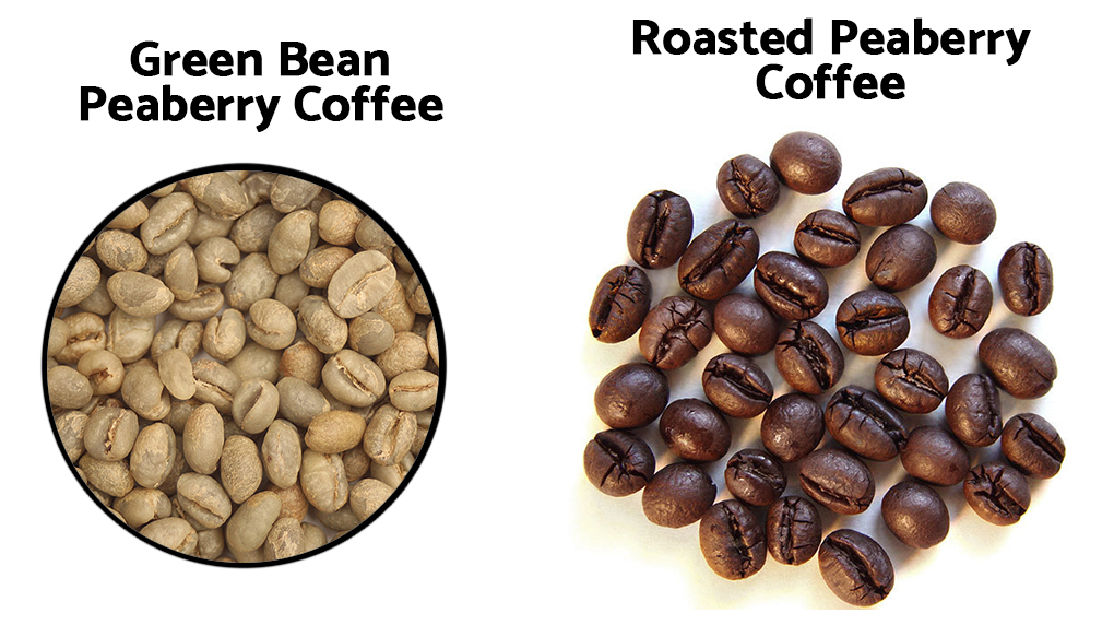 Green Bean Peaberry vs Roasted Peaberry